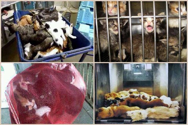 日本では5分に1匹のペースで犬猫の殺処分が行われている