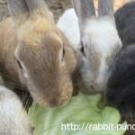 野生のウサギや毒ガス工場!広島の大久野島休暇村を全力で楽しむ!