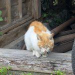 我が家に現れたガリガリの野良猫を保護…君の名はヤンマー!
