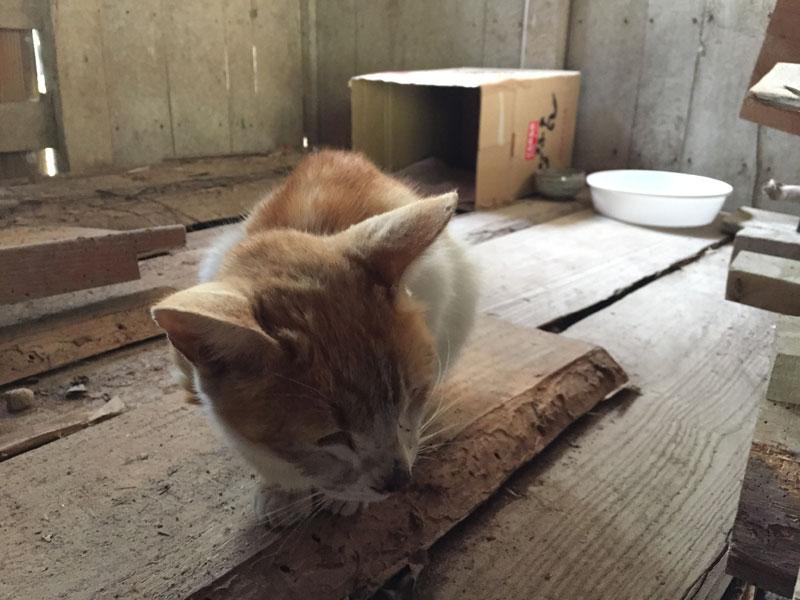 野良猫のためのエサと水と寝床を残して旅行へ