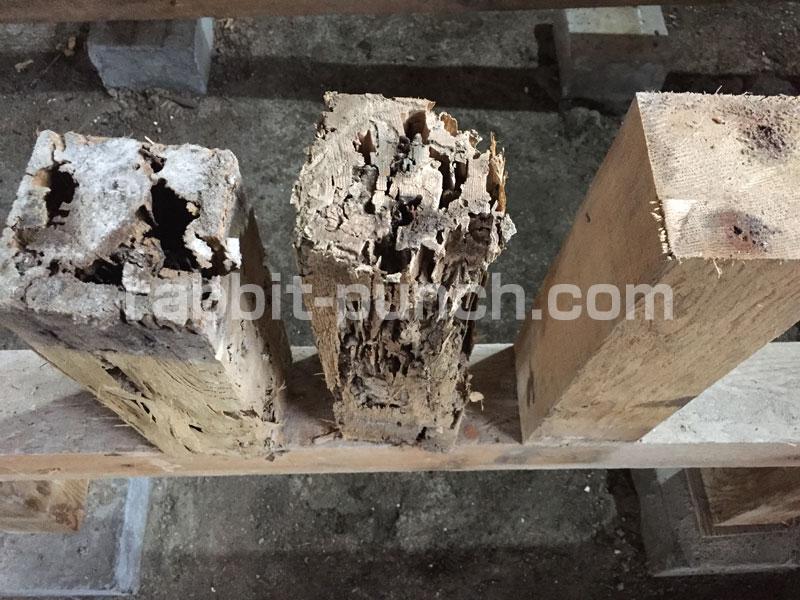 シロアリによって腐ってしまった束柱