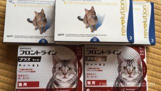 猫の寄生虫に効く薬まとめ!ノミ・ダニ・回虫・条虫を簡単駆除!
