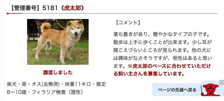 千葉県動物愛護センターの虎太郎(コタロウ)
