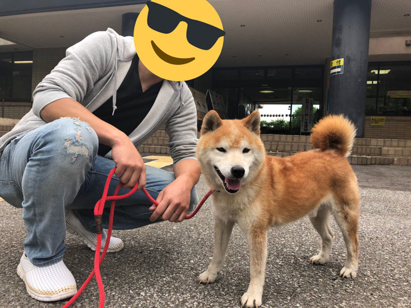 千葉県動物愛護センターから保護犬を家族に迎え入れた話