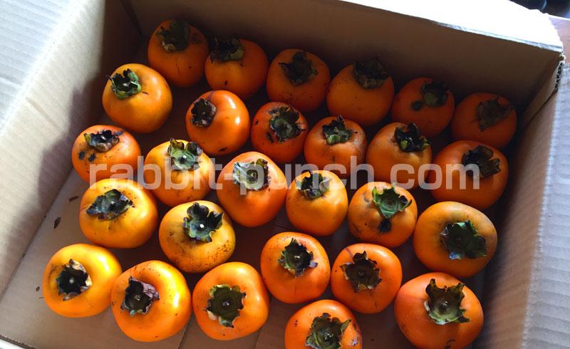 大量の柿を収穫