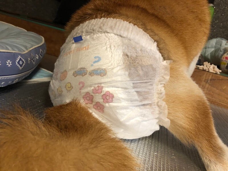 高齢犬介護には子供用紙オムツがおすすめ